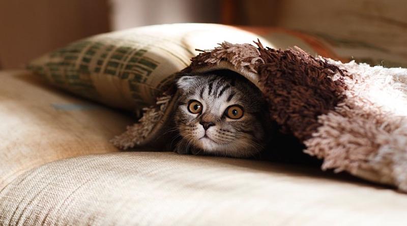 που βγαίνει με κάποιον με αλλεργίες γάτας